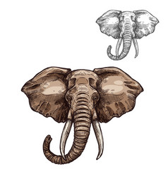 elephant isolated sketch of african mammal animal vector image