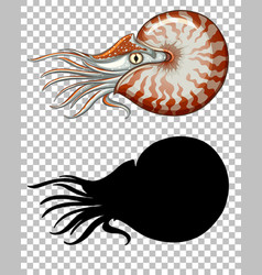 chambered nautilus with its silhouette on vector image