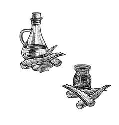Hand drawn sketch of aloe vera oil extract vector
