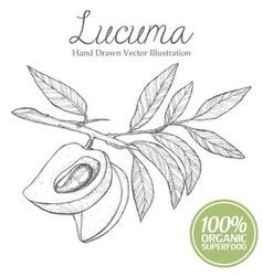 Lucuma Fruit vector
