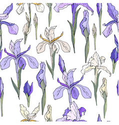 seamless season pattern with blue and white irises vector image
