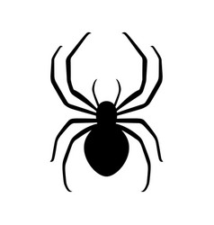 tiny little spider vector image