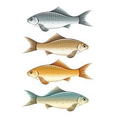 Set of live colour fish vector image