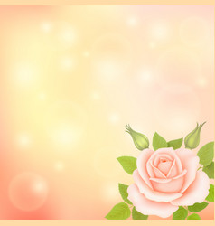 Blurry soft background with rose vector