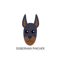 Doberman pincher face dog breed card flat cartoon vector