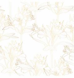 Golden line alstroemeria lilies flower vector