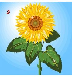One sunflower vector