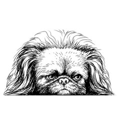 pekingese dog sticker on wall in form vector image