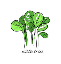 Watercress fresh culinary plant green seasoning vector