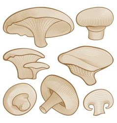 woodcut mushroom icons vector image vector image