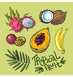 tropical fruit vector image
