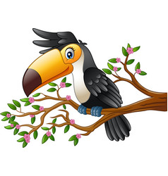 cartoon funny toucan on a tree branch vector image