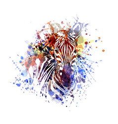 color of zebra vector image
