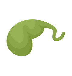 Gallbladder icon flat style vector