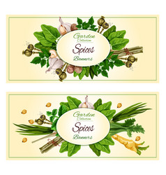 spices and herbs banner set for food design vector image