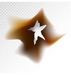 burnt hole in form of star with dirt around vector image