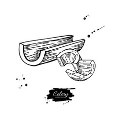 Celery stick hand drawn vector