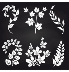 Decorative floral branches on blackboard vector