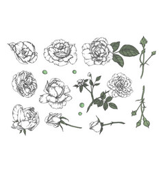 set of hand-drawn floral elements in sketch style vector image