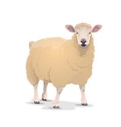 White sheep domestic cartoon animal icon vector