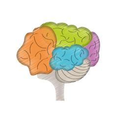 drawing colo brain idea innovation vector image vector image