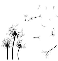 Dandelion silhouette Flying dandelion buds vector image