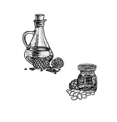 hand drawn sketch of pine nut oil extract of vector image