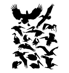Pelican detail silhouette vector