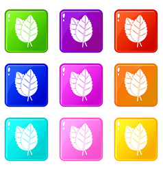 Two basil leaves icons 9 set vector