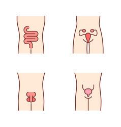 Healthy human organs color icons set intestines vector