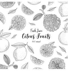 organic citrus fruit banners healthy food vector image