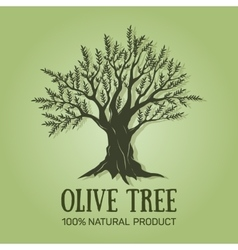 Hand drawn graphic olive tree vector