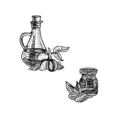 Hand drawn sketch almond oil extract plant vector