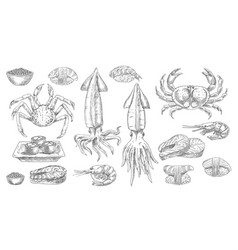 seafood sketch food sea fish and sushi icons vector image