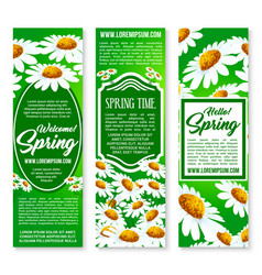 hello spring floral banner set with daisy flowers vector image