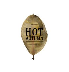Hot autumn sale banner vector