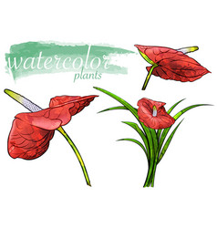 red watercolor flower set vector image