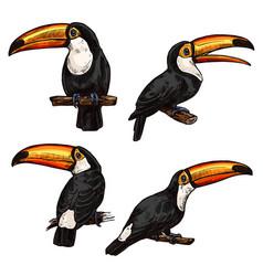 Set of exotic bird toucan vector