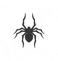 Spider hand drawn vector