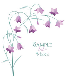 summer flower campanula vector image vector image