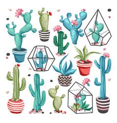 cacti flower set vector image