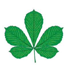 chestnut leaf isolated vector image