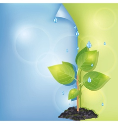 Eco background with plant and water drops vector image