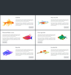 exotic marine animals with shine fins and skins vector image
