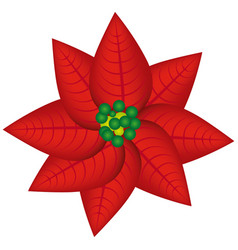 Realistic color poinsettia christmas flowers vector
