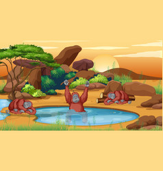 Scene with chimpanzees in pond vector