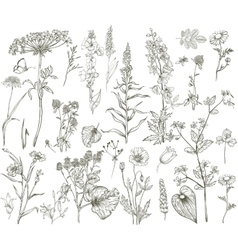 wild floral collection vector image