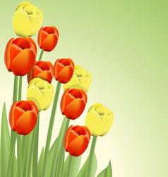 bouquet tulips vector image vector image