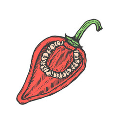 hand drawn of red cut pepper sketch style doodle vector image vector image