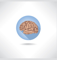 Brain icon human organ anatomy medical sign vector